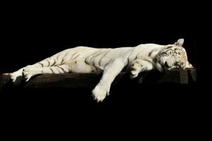 Harimau Mati