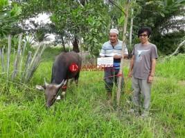 Hewan Kurban dari Pemkab Mesuji Diterima Desa Sritanjung