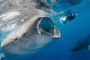 Hewan Laut Jadi Mata-Mata Militer