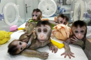 Hibrida Manusia-Monyet