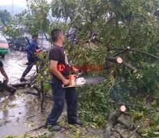 Hujan Deras, Pohon Kedondong Hutan Tumbang