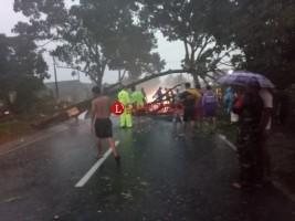 Hujan Deras Tumbangkan Pohon di Pringsewu