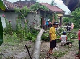 Hujan Disertai Angin Kencang, Dua Rumah di Palas Tertimpa Pohon