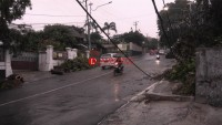 Hujan Lebat Akibatkan Pohon Tumbang di Teluk Betung Utara
