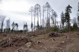 Hutan Penangkal Bencana