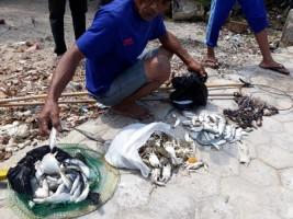 Ikan dan Biota Laut di Teluk Laut Panjang Mendadak Mati, Mitra Bentala Desak Pemerintah Turun Tangan