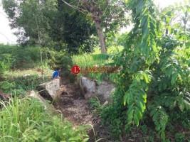 Irigasi Tak Terurus, Ratusan Hektare Sawah di Seputihmataram Gagal Panen