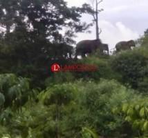 Jadi Perlintasan, Warga Roworejo Diminta Tenangkan Gajah