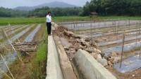 Jebol Diterjang Banjir, Kadis PUPR Pringsewu Klaim Jaringan Irigasi Tak Dibangun PUPR