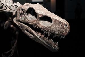 Jejak Fosil 100 Juta