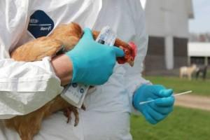 Jemaah Haji Suspect Flu Burung Dirawat Intensif