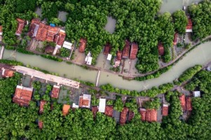 Jutaan Hektare Mangrovedalam Kondisi Kritis