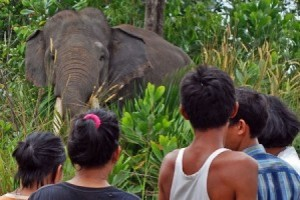 Kawanan Gajah Kembali ke Pemukiman Warga di Rowoagung