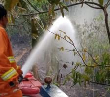 Kebakaran Lahan di Penengahan Kejadian Ke-24 di Lamsel