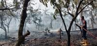 Kebakaran Lahan Masih Terjadi di Lamsel