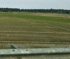 Kemarau, 800 Ha Sawah Tanah Hujan di Ketapang Terancam Alami Kekeringan