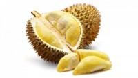 Kirim Durian ke Luar Angkasa