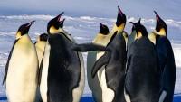 Koloni Penguin Kaisar Lenyap