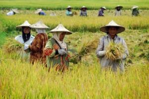 Deklarasi Hak Asasi Petani dan Masyarakat Pedesaan Disetujui PBB