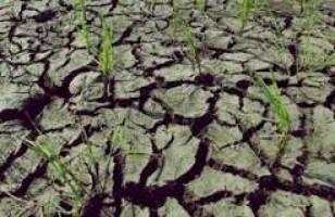 Kondisi Lahan Sawah Petani Lampung Barat Aman Dari Kekeringan