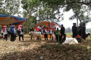 Kontes Kambing Dorong Pengembangan Sentra Peternakan