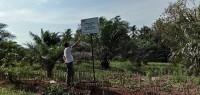 KPK Sita Kebun Sawit 1,2 Hektare Milik Zainudin