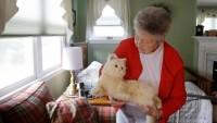 Kucing dan Penderita Demensia