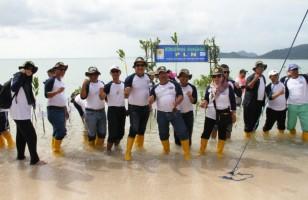 Lahan Mangrove Berkurang, PLN UPK Tarahan Tanam 1001 Bibit