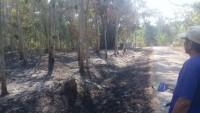 Lahan Perkebunan di Sragi Terbakar