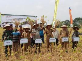 Lampung Timur Tingkatkan Produksi Kedelai Nasional