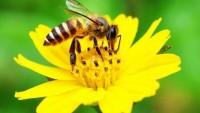 Lebah Pecahkan Matematika Dasar