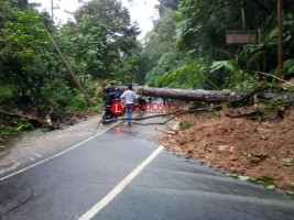 Longsor dan Pohon Tumbang di Way Krui, Lalu Lintas Liwa-Krui Terganggu