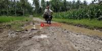 Masyarakat Desa Suak Harapkan Perbaikan Jalan