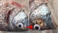 Mata Ikan Mainan