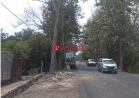 Membahayakan, Ranting Pohon Kering di Kotabumi Dipangkas