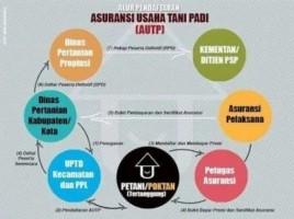 Minat Petani Daftar Asuransi UsahaTani Padi Masih Rendah