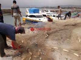 Musim Kemarau, Hasil Tangkapan Ikan Nelayan Pesisir Barat Melimpah