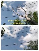 Padam Listrik di Ketapang Akibat Pohon Tumbang
