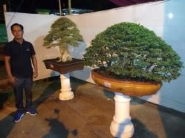 Pameran Bonsai di Pringsewu Expo Sedot Animo Warga