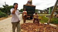 Pemasangan Portal Lingkar Kota Pengaruhi Pendapatan Petani Tubaba