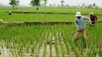 Pemkab Lamsel Tetapkan Lahan Pertanian Pangan Berkelanjutan 36 Ribu Ha