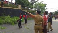 Pemkot Tebang Pohon Kedondong Hutan di Sepanjang Jalan Basuki Rahmat