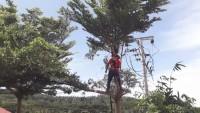 Pemuda Asal Kemiling Meninggal Tersengat Listrik Saat Menebang Pohon
