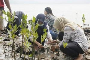 Penanaman Mangrove Masih Butuh Perhatian