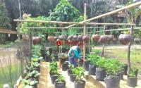 Pengembangan Program KRPL di LampuraGandeng Kelompok Wanita Tani