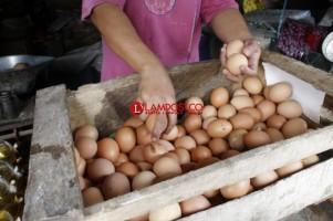Permainan Harga Telur Miliki Peluang Kecil