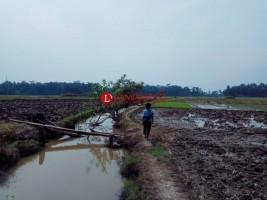 Persediaan Air Pertanian di Sukaraja Aman