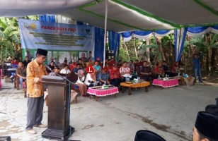 Pertanian di Desa Pulaujaya Berkembang Pesat