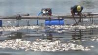 Petambak Ikan Keramba di Wayrarem Merugi