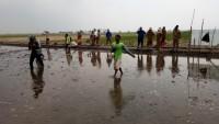 Petani Bandanhurip Uji Coba Padi Tahan Air